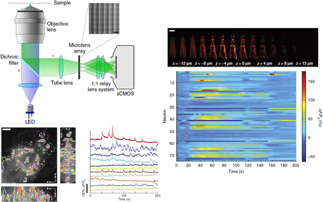 Synthetic neurobiology group ed boyden principal investigator high speed large scale three dimensional 3d imaging of neuronal activity poses a major challenge in neuroscience here we demonstrate simultaneous ccuart Image collections